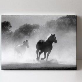 Fotoobraz divocí koně
