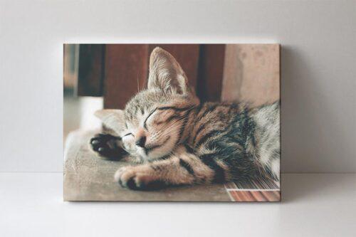 fotoobraz kotě