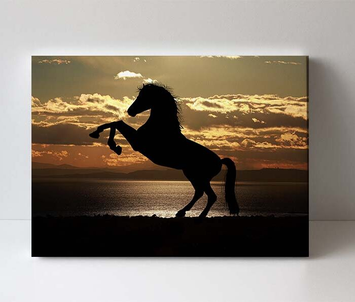 fotoobraz kůň