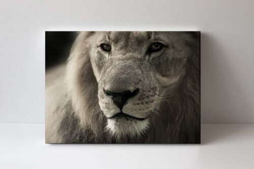 fotoobraz lev