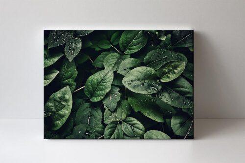 fotoobraz zeleň