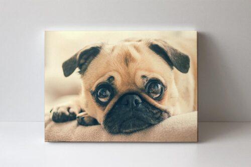 fotoobraz pes