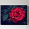 fotoobraz růže