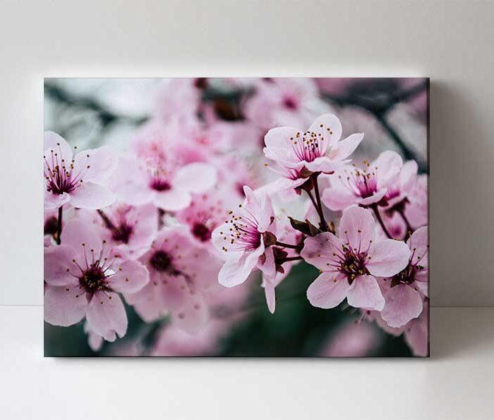 fotoobraz sakura