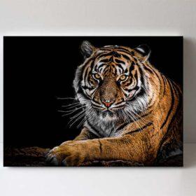 fotoobraz tygr